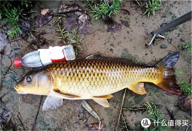 三种跑鱼的可能:水下、水面、飞鱼,从本质出发有效避免,别错过