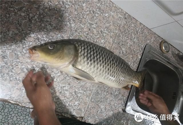 """面对黑坑""""回锅鱼"""",巧用白饵出奇制胜,让滑口鱼无处可逃"""