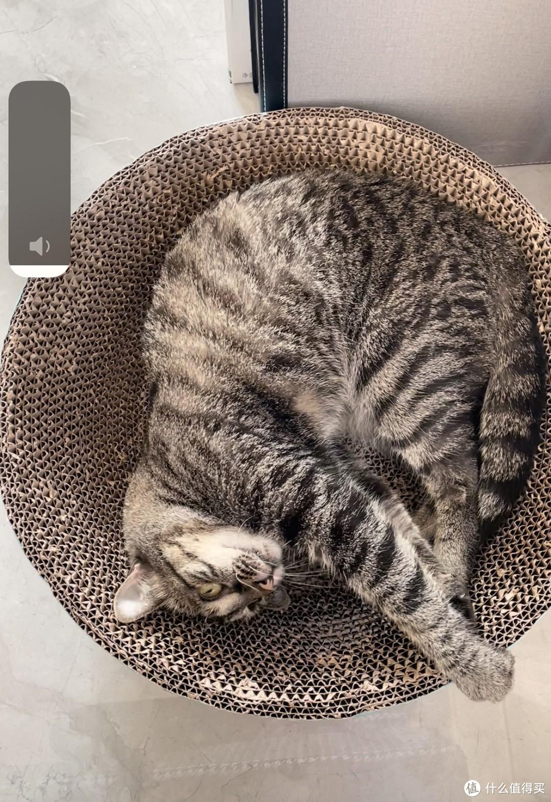 养猫开销大揭秘:你是穷养党还是富养党?
