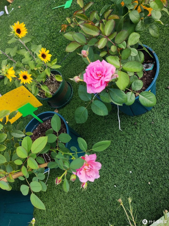 露台种花种菜的经验总结