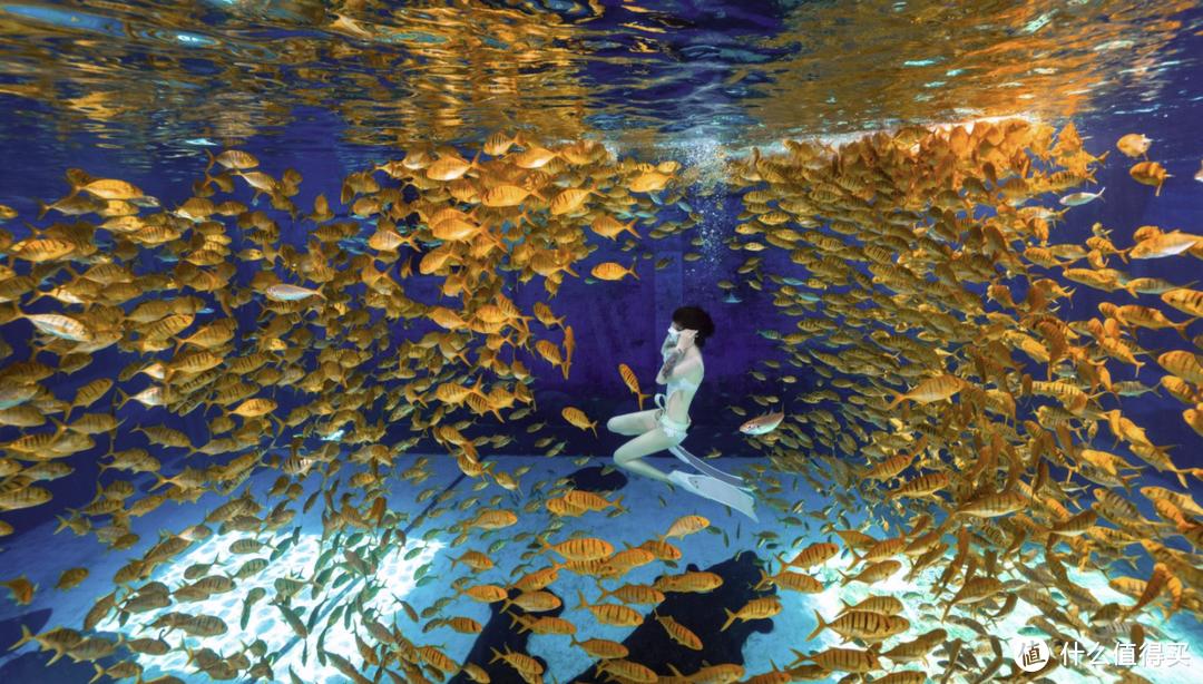 依靠自身能力进行潜水活动