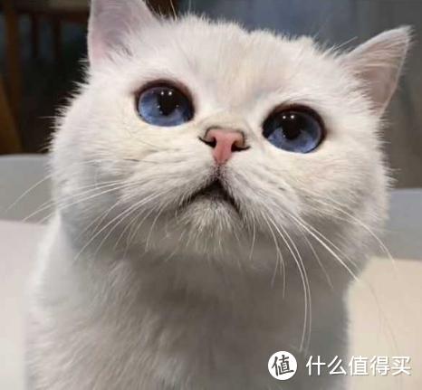 猫吃卵磷脂还是鱼油:猫用卵磷脂品牌排名看过来!