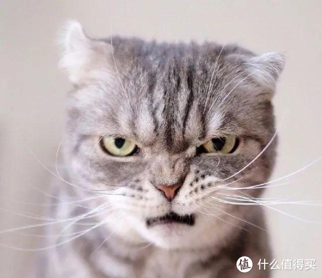 一篇文章告诉你猫吃维生素有多重要