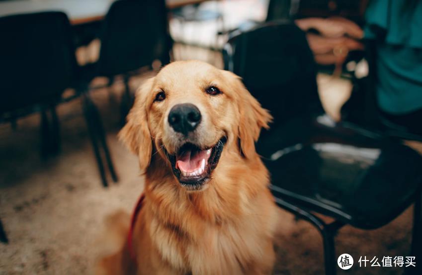 天然狗粮品牌怎么选?看懂配方是第一位的!