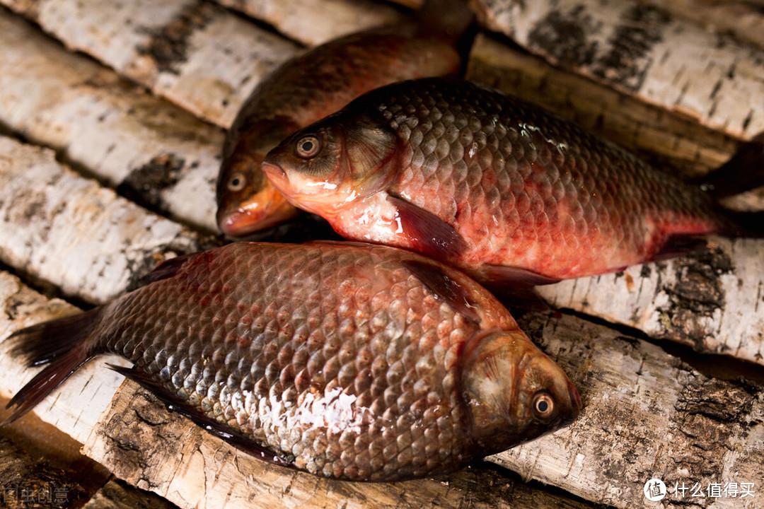买鲫鱼不是越大越好,老渔民教你挑选,肉嫩味鲜,煲汤红烧都好吃