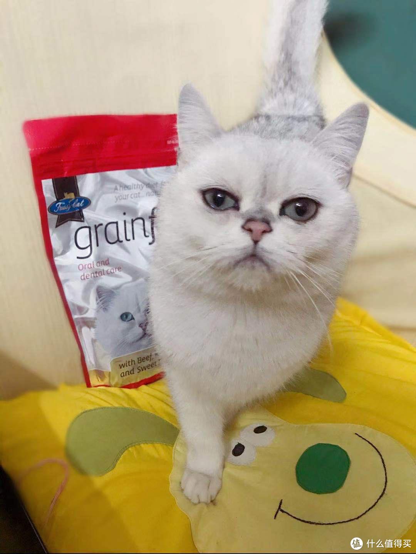 千万不要养猫 否则你会离不开它的️