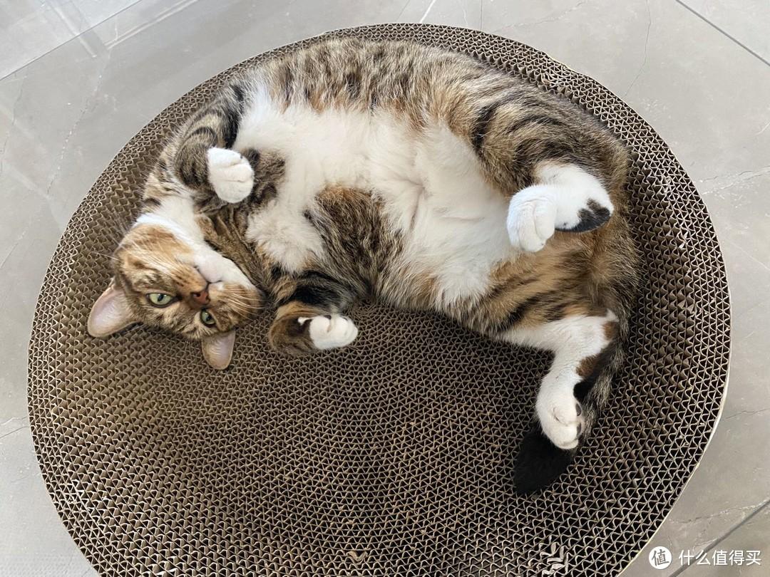 猫粮选择攻略&高爷家麦肯鸡猫粮测评:小猫咪身上的肉,都是凭本事吃出来的