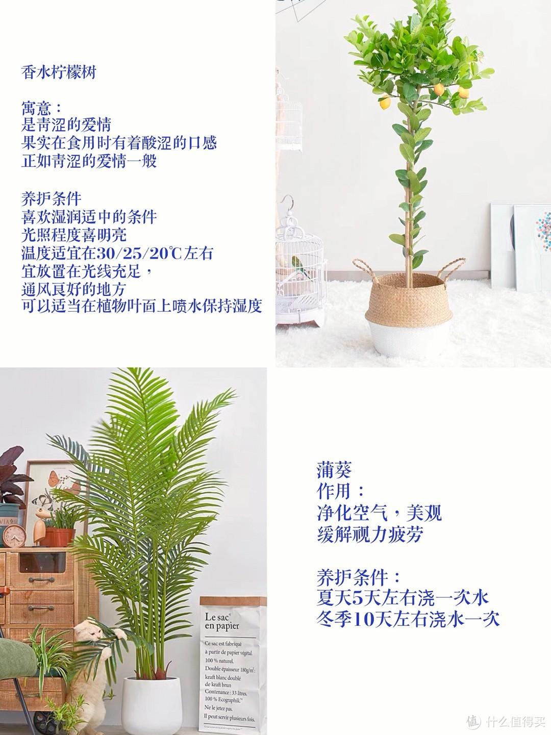 ins博主同款的9种网红绿植🌵附养护说明