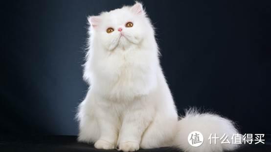 猫掉毛怎么办,不妨试试猫卵磷脂