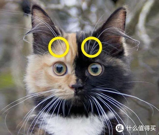 猫卵磷脂的功效与作用,猫卵磷脂是什么