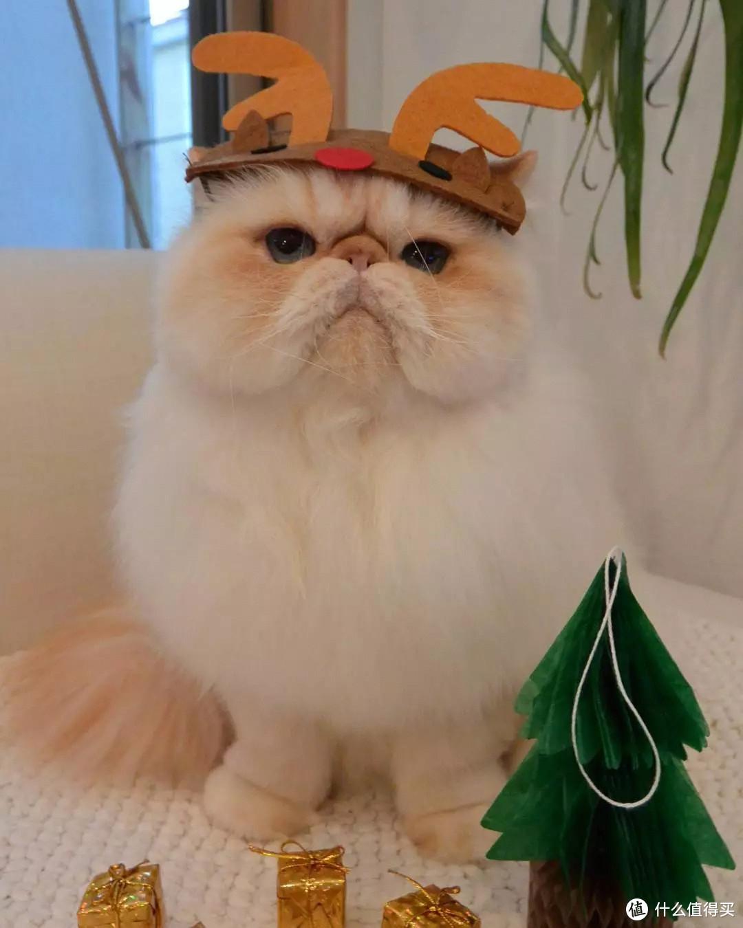 猫卵磷脂:老年猫有必要吃卵磷脂吗