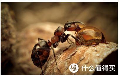如何除掉家里的蚂蚁??