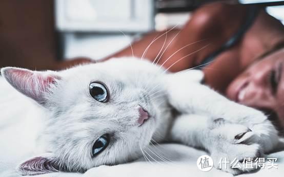性价比高的猫粮推荐,国产猫粮不能输