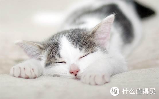 猫咪营养膏是不是必须要吃
