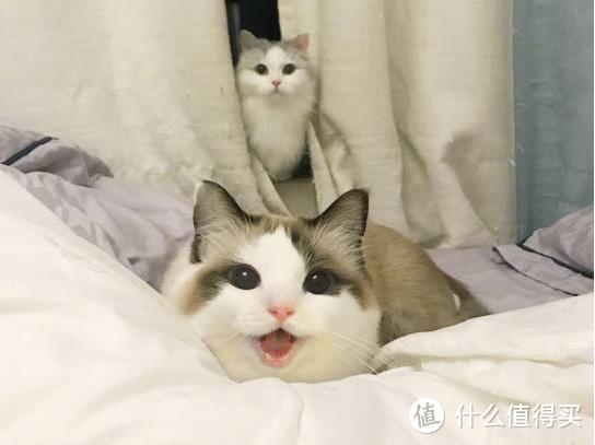 猫咪营养膏有哪些功效与作用