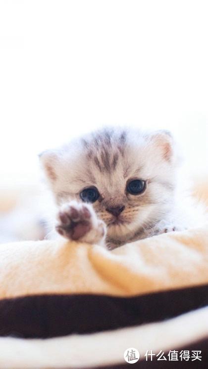 猫羊奶粉排名那些事你都知道吗