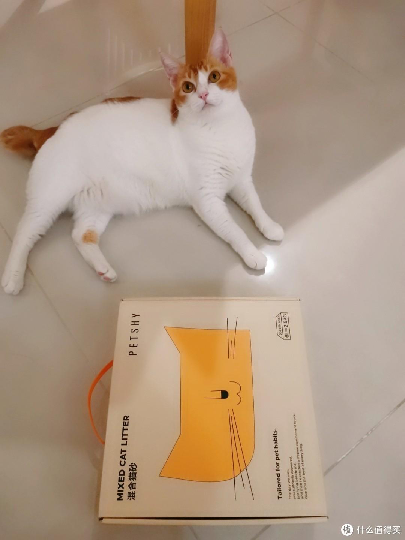 1+1>2~PETSHY混合猫砂