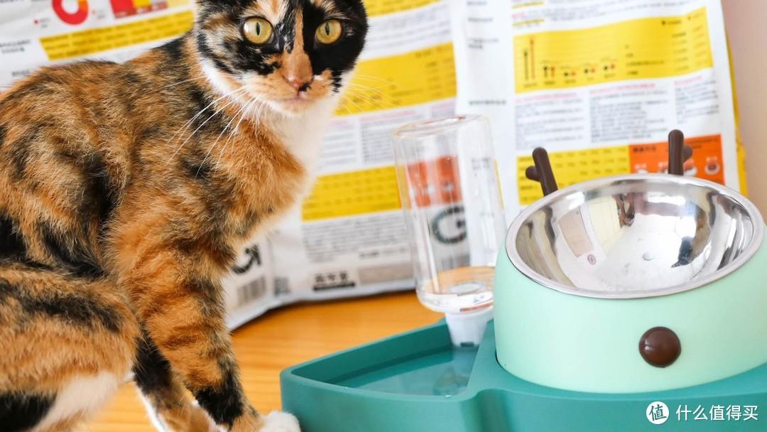 """为喵主子买过几十种猫粮后,最后终于总结出一款""""真香""""猫粮!"""