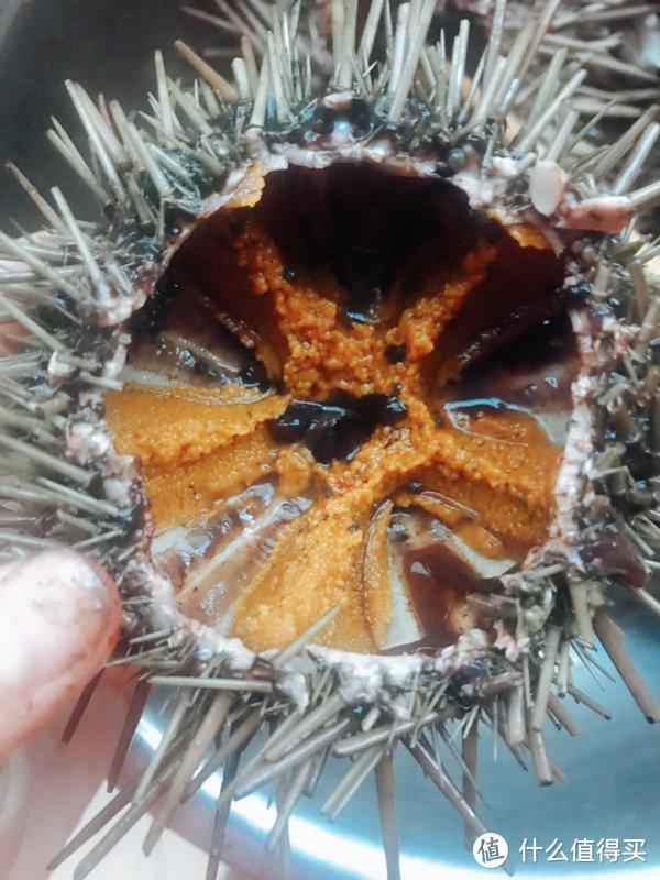 开海之后的豪华早餐,吃口海胆蒸蛋,鲜从嘴边来!